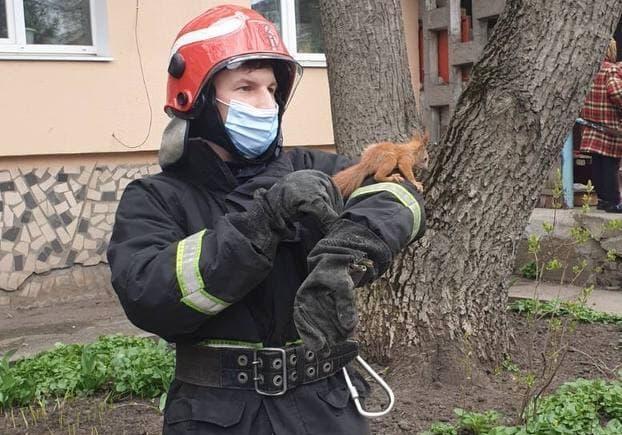 В Кропивницком спасли застрявшую на балконе белку