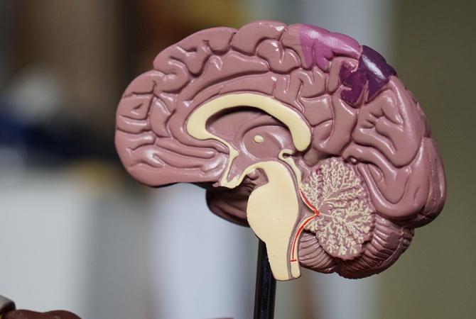Ученые обнаружили закономерность между объемом мозга и тягой к алкоголю