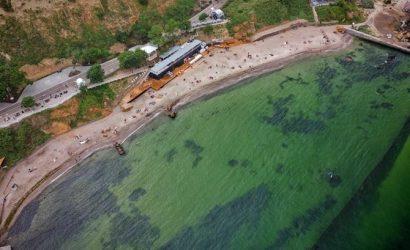 Отдых на море в Украине: с токсичными водорослями, змеями и морскими блохами