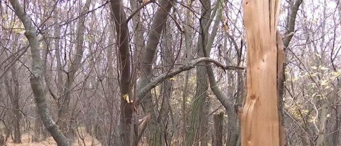 В Покровском районе полиция пресекла вырубку леса