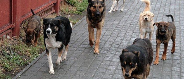 В «ДНР»: В Дебальцево собаки нападают на людей