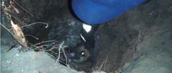 В Рубежном из бетонной ловушки спасли домашнюю собаку (Фото)