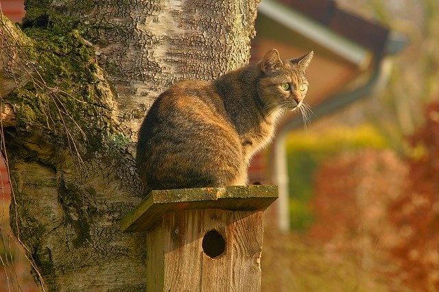Эмоции кота можно понять по мимике — пройдите тест на эмпатию к животным
