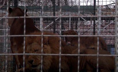 Только налог на землю – 30 тысяч: В Мариуполе из-за локдауна зоопарк остался без денег (Видео)
