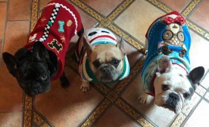 Отец Леди Гаги о похитителях собак: Этим ребятам не повезло