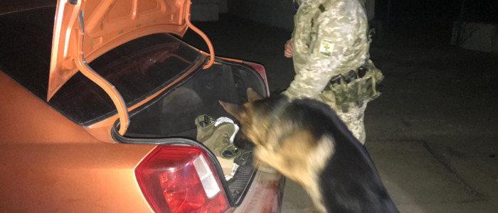 В КПВВ «Золотое» пограничный пес нашел наркотики