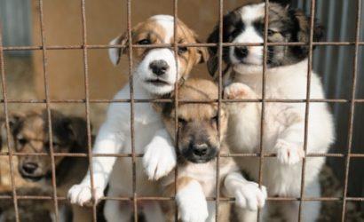 В Покровске построят приют для бездомных животных