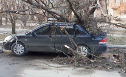 Ветер в Мариуполе: Дерево упало на автомобиль (Фото)
