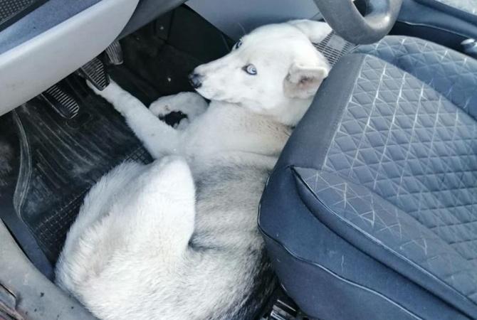 Патрульные Львова спасли собаку, которую сбил и бросил умирать водитель