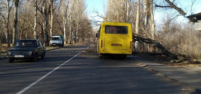 В Донецке на маршрутку упало дерево (Фото)