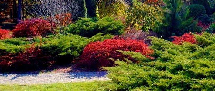 Оттенки от ярко-желтых до багрово-красных: В Донецке показали Ботанический сад (Фото)