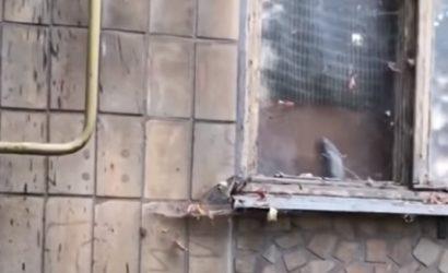 В Донецке сообщают о крысиных набегах в центре (Фото)