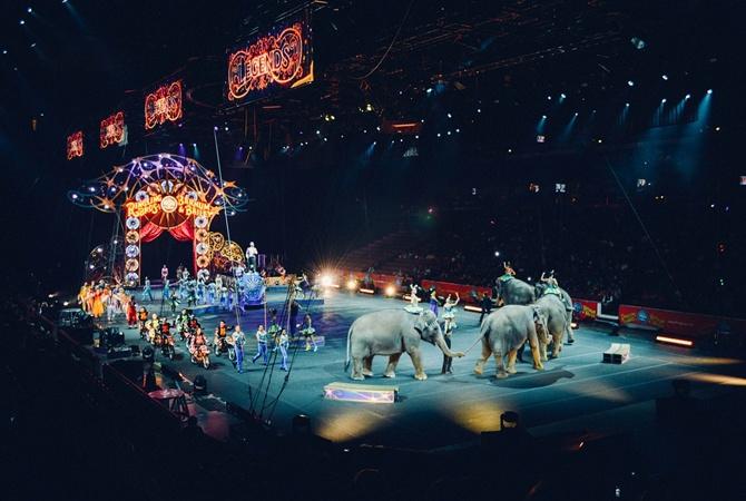 Во Львове запретили эксплуатацию животных в цирках и дельфинариях