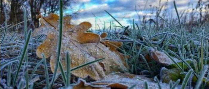 На Донбассе прогнозируют сильные заморозки