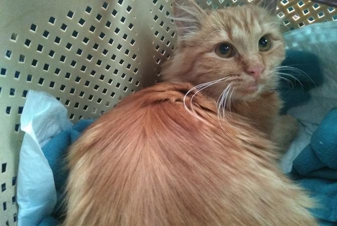 Читательница «КП» в Украине» «удочерила» кошку, о которой прочитала у нас