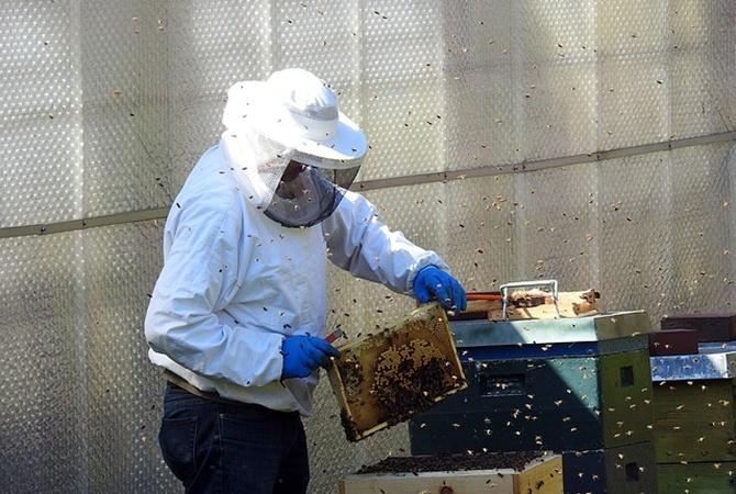 На Ровенщине пчелы закусали насмерть пасечника