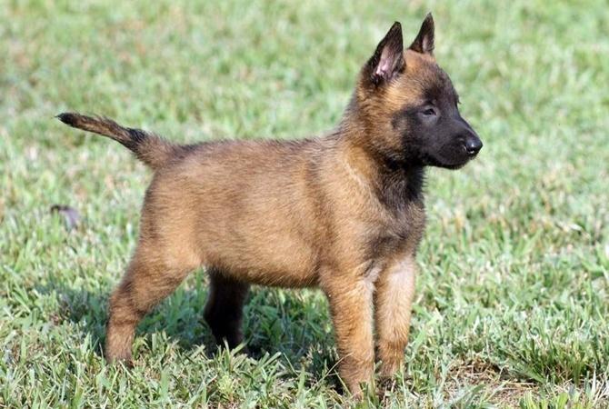 В Черкасской области будут судить мужчину, который заколол вилами соседского пса