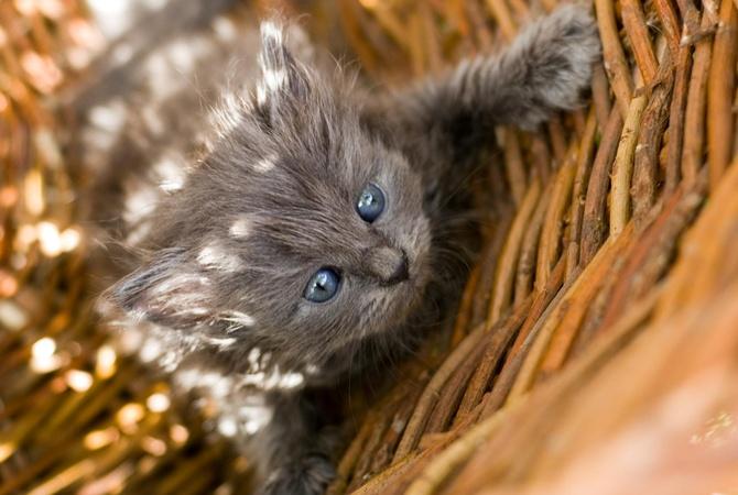 В Киеве из окна квартиры выбросили кошку с котятами