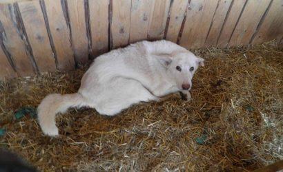 У киевлянина забрал девять собак, над которыми тот издевался и почти не кормил