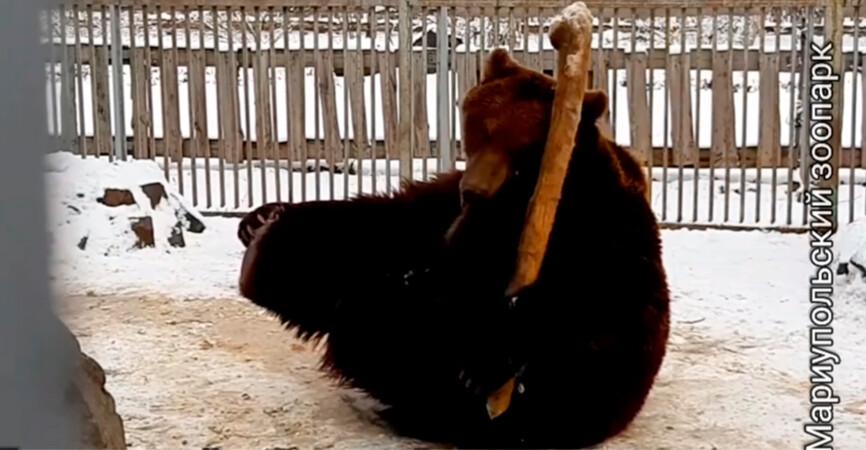 В зоопарке Мариуполя: Звери из южных широт радуются снегу (Видео)