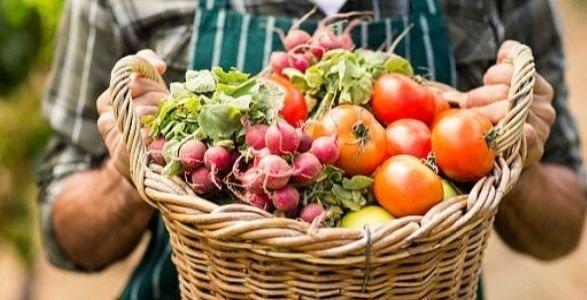 На Донетчине растет производство всех основных видов сельхозпродукции