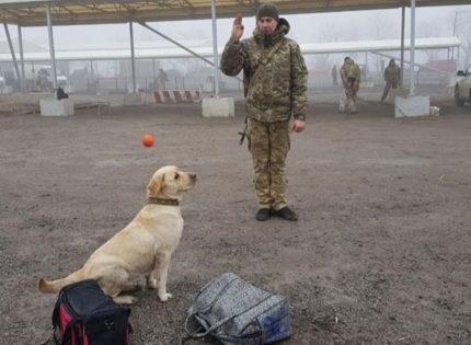 Служебные собаки на КПВВ: Как тренируют четвероногих помощников (Фото)
