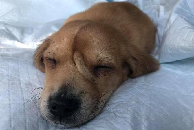 В США спасли щенка с хвостом на голове
