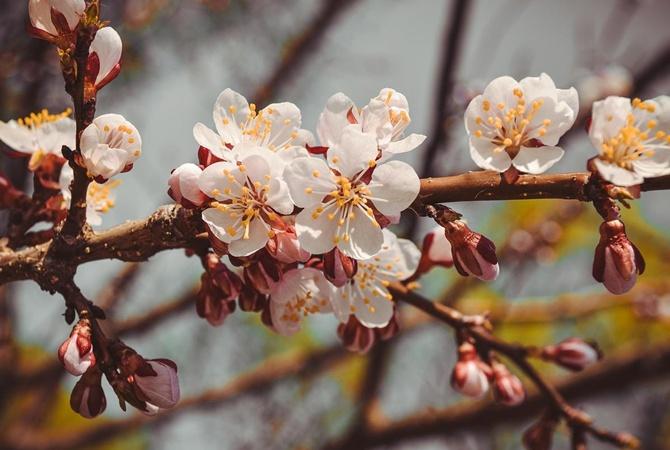 Погода на майские праздники: после Пасхи должно потеплеть, но ждите дождей