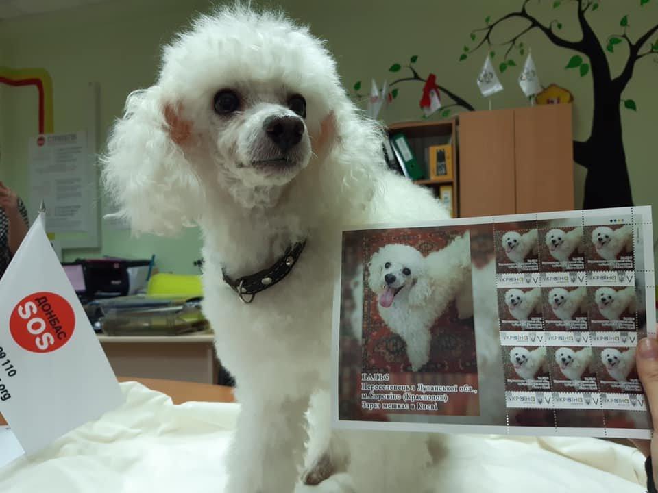 Пес-переселенец из Донбасса получил собственную почтовую марку (Фото)