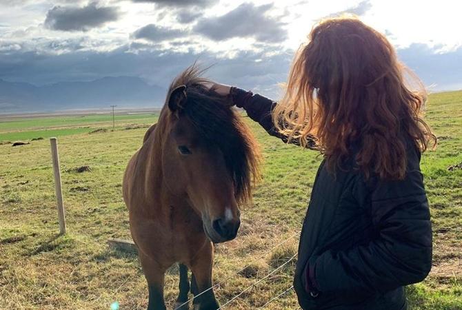 В Исландии прошла вечеринка пони, на которую их привезли на минивэнах