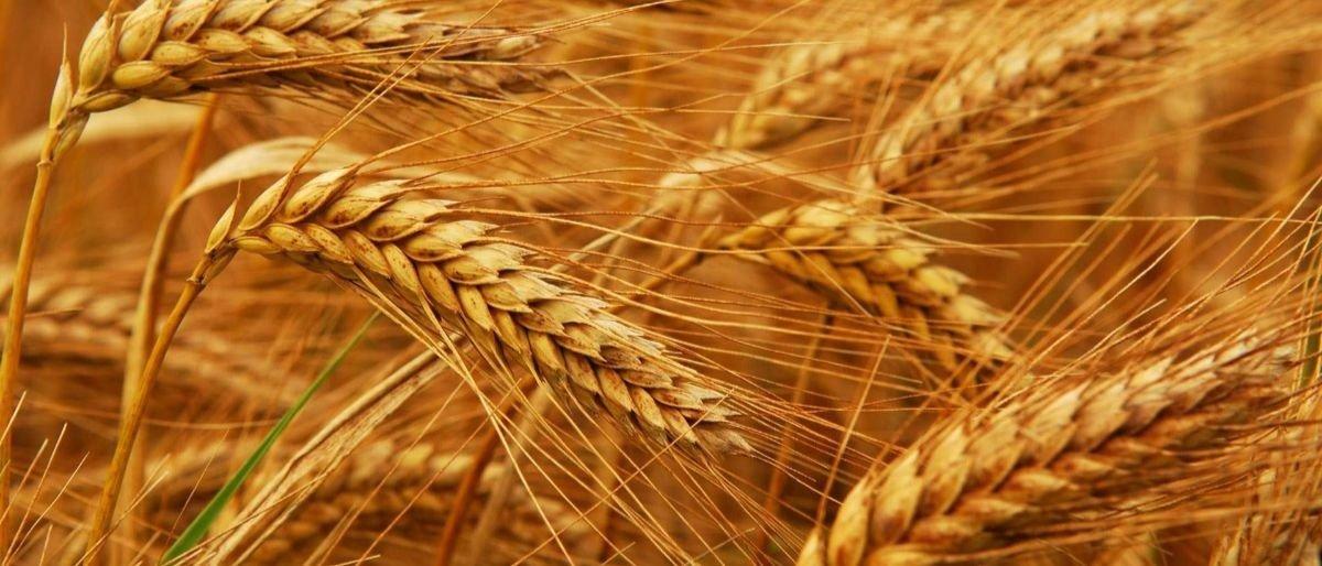 На Донетчине объем производимой сельхозпродукции растет