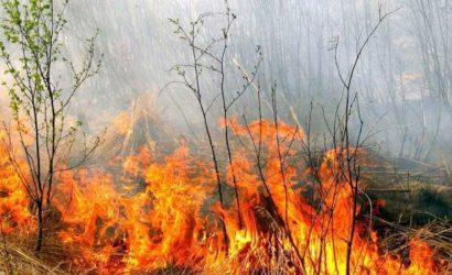 Более 800 пожаров за неделю: В «ДНР» на пожарах погибли три человека