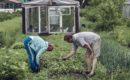 Суд Запорожья разрешил не надевать маски на огороде