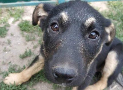 В Запорожье спасают собак, которых хотели закатать в фундамент