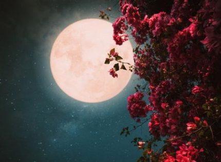 Клубничное полнолуние в июне — когда наступит и что советуют астрологи