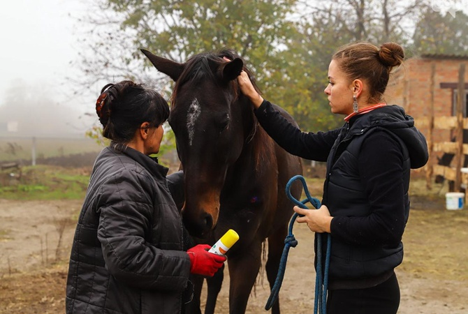Как под Запорожьем обживается табун лошадей, эвакуированных из прифронтовой Авдеевки