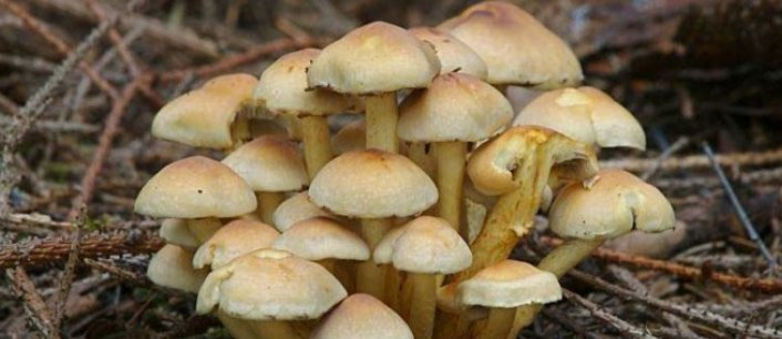 В «ЛНР» мать накормила полуторагодовалого сына грибами и пообедала сама, оба – в реанимации