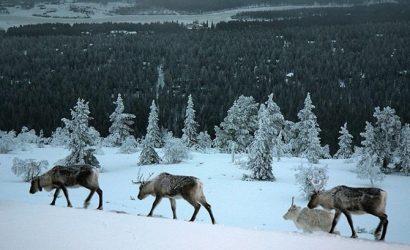 Финляндия побила температурный рекорд