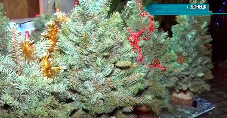 В 5 раз дороже: Продавцы рассказали о ценах на елки и сосны в Донецке