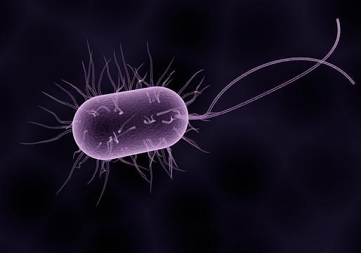 Модифицированных бактерий готовят к поиску мин для армии США