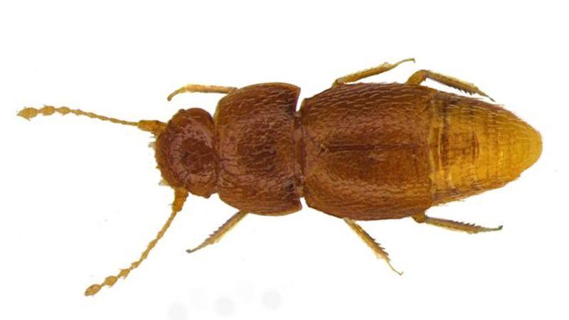 Именем Греты Тунберг назвали насекомое