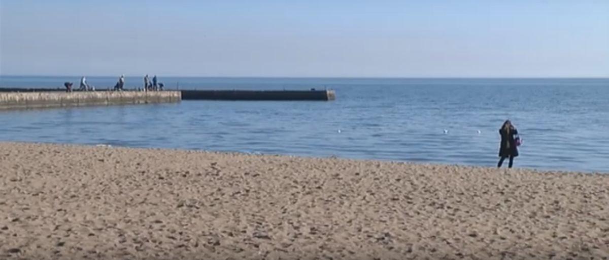 Донетчина: Почему в Азовском море умирают дельфины (Видео)