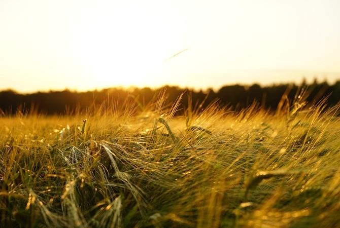 Три четверти украинцев против открытия рынка земли