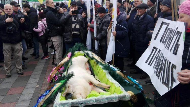 Аграрии принесли под Раду свинью в гробу (видео)