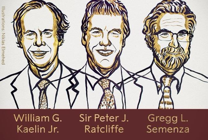 Нобелевскую премию по медицине-2019 дали трем ученым за кислород