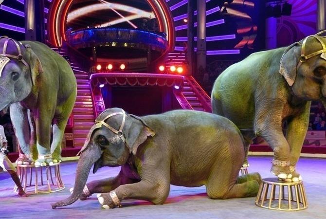 В Париже запретили передвижным циркам эксплуатировать диких животных