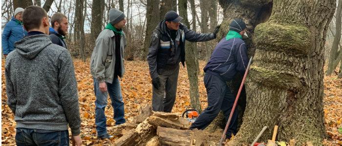 На Донетчине впервые лечат историческое дерево, которому более 170 лет (Фото)
