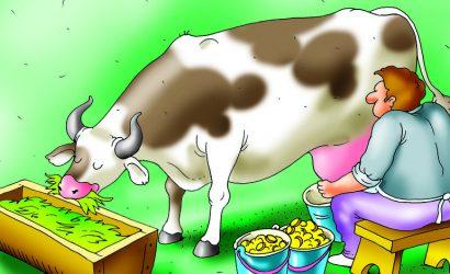 Анекдоты про коров: 24 октября