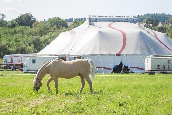 UAnimals: Министерство культуры прекращает покупать животных для цирков