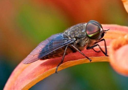 На Волыни у женщины обнаружили туляремию после укуса насекомого